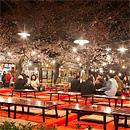 夜櫻:圓山公園、八坂神社