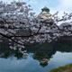 大阪賞櫻之旅:大阪城公園2