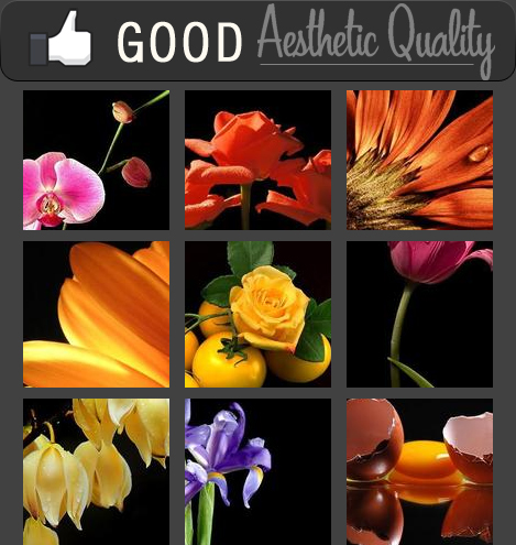 Floewrs: Good Aesthetic Quality